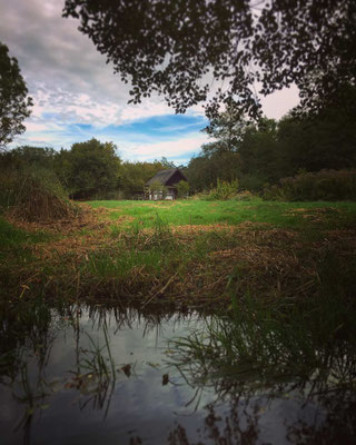 Wiesenlandschaft bei Lehde im Spreewald
