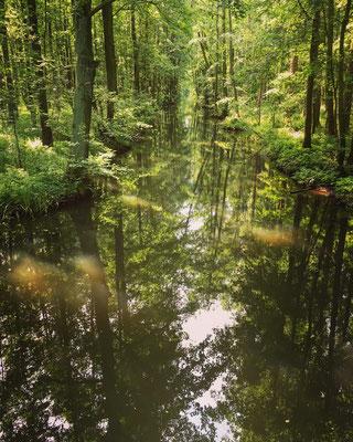 urige Wasserlandschaft Spreewald