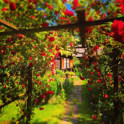Idylle im Vorgarten in Lehde im Spreewald