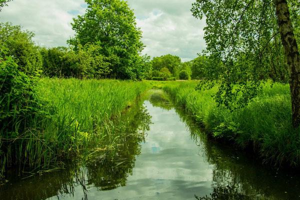 Wiesenlandschaft bei Lehde im Biosphärenreservat Spreewald