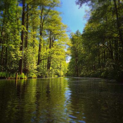 die Hauptspree zwischen Lübbenau und Leipe im Biosphärenreservat Spreewald