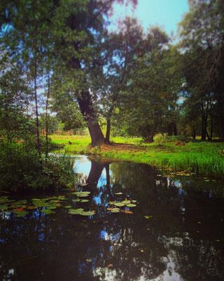 eins von hunderten Fließen im Unesco Biosphärenreservat Spreewald