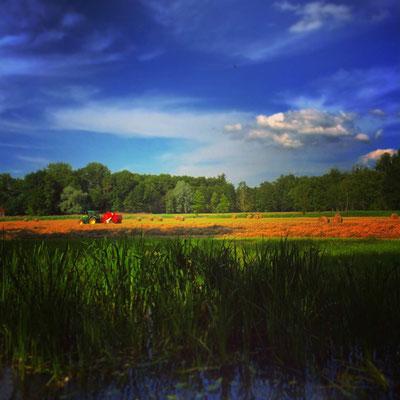 Ufer im Biosphärenreservat Spreewald