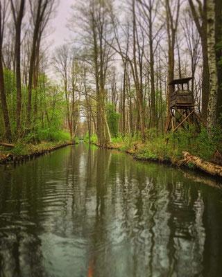 im Biosphärenreservat Spreewald