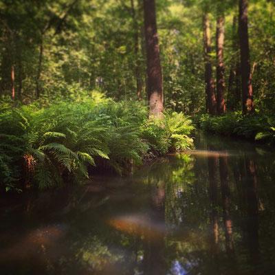 geheimnisvolles Fließlabyrinth im Biosphärenreservat Spreewald