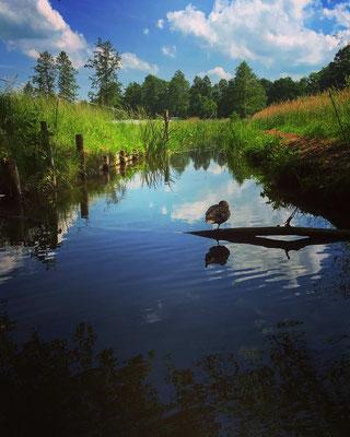 Einfahrt zu einem Wassergrundstück im Biosphärenreservat Spreewald