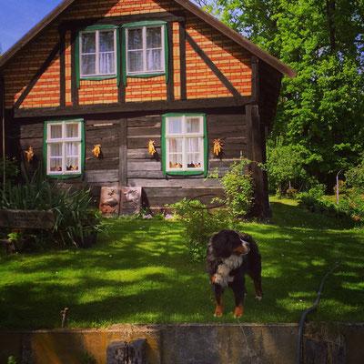 typisches Holzhaus im Lagunendorf Lehde im Spreewald