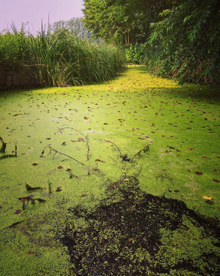 grüne Sumpflandschaft im Spreewald