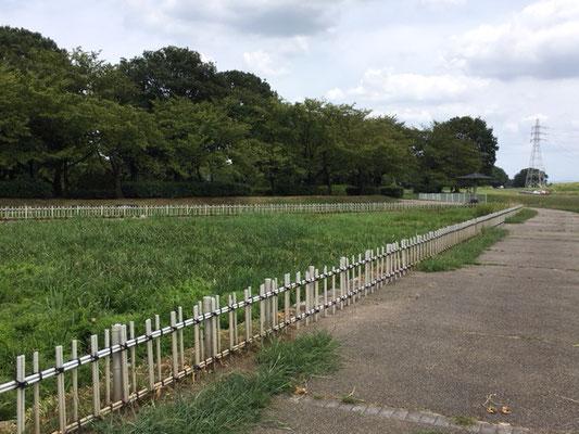 庄内緑地公園_菖蒲園_002