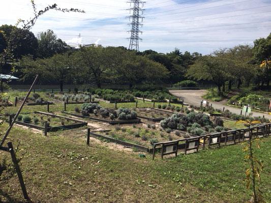 荒子川公園の花・植物_008