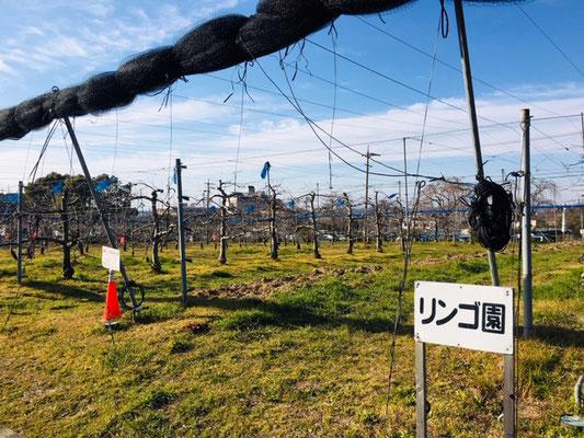 東谷山フルーツパーク_収穫体験_002