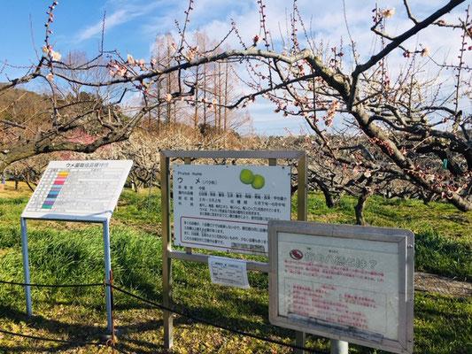 東谷山フルーツパーク_収穫体験_001