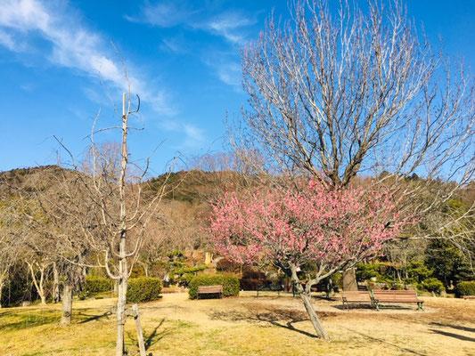 東谷山フルーツパーク_季節の花_006
