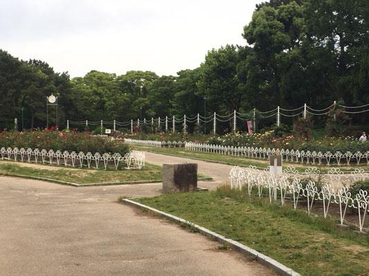 鶴舞公園_園内_002