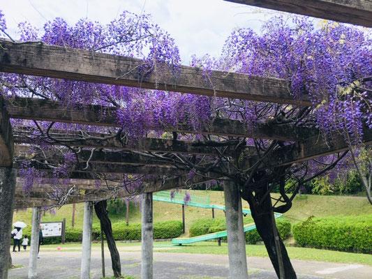 犬山ひばりヶ丘公園_季節の花・植物_001