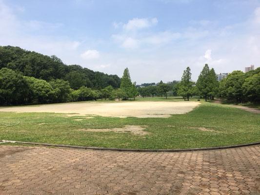 平和公園_メタセコイア広場_001
