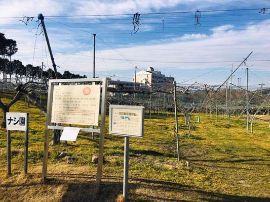 東谷山フルーツパーク_収穫体験_004