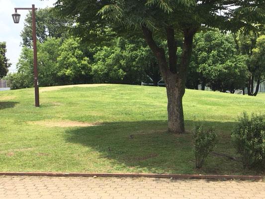 朝宮公園_遊具横の芝生広場(少しだけあります)