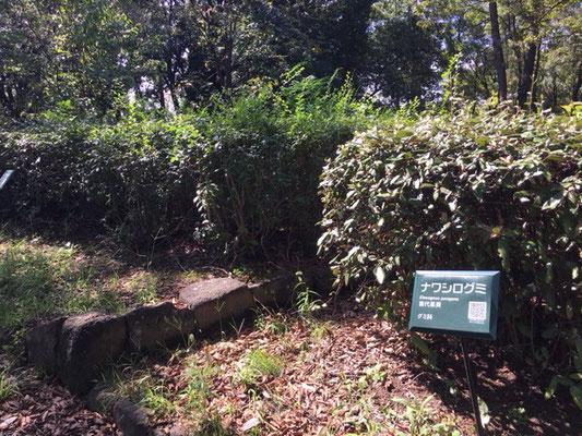 荒子川公園の花・植物_003