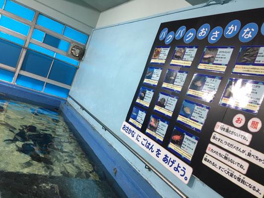 竹島水族館_さわりんプール(体験施設)_003