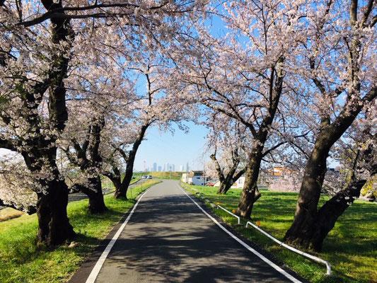 蛇池公園の桜_009