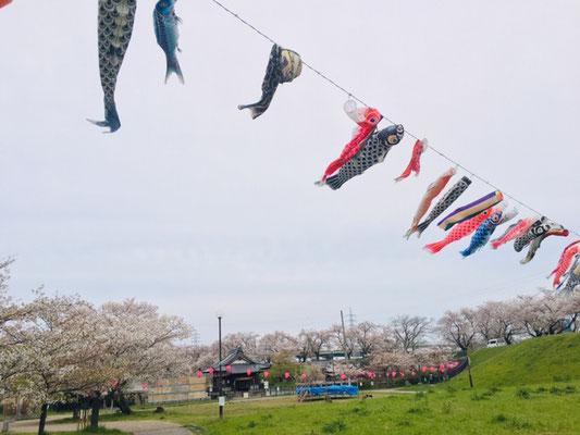 蛇池公園の桜_011