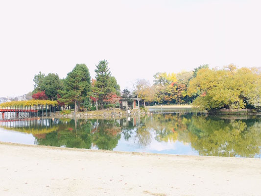 天王川公園_季節の花・植物_005