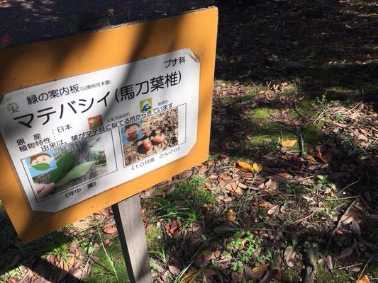 荒子川公園の花・植物_004