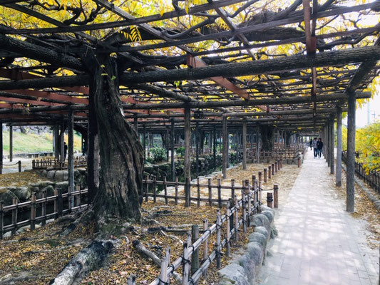 天王川公園_季節の花・植物_001