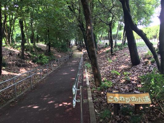 朝宮公園_こもれびの小道