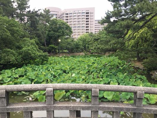 鶴舞公園_園内_003