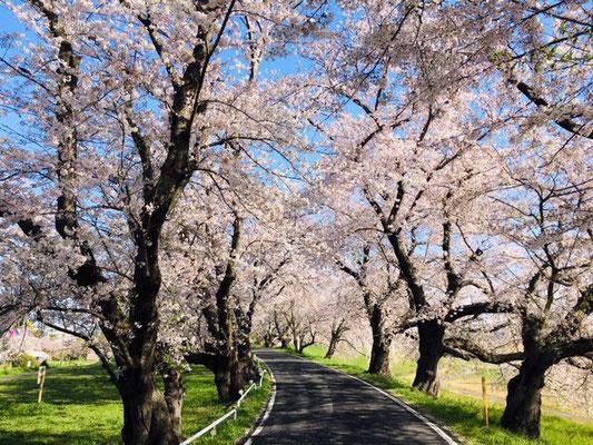 蛇池公園の桜_008
