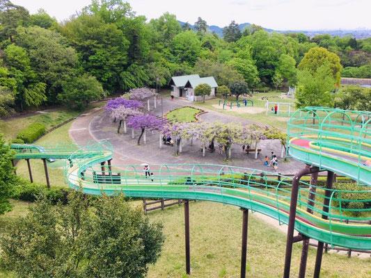 犬山ひばりヶ丘公園_季節の花・植物_003