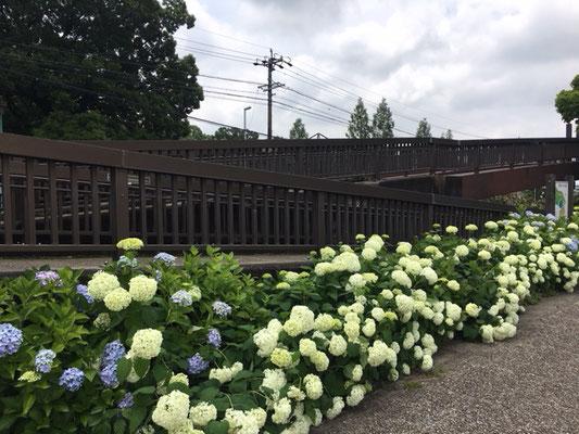茶屋ヶ坂公園_遊歩道