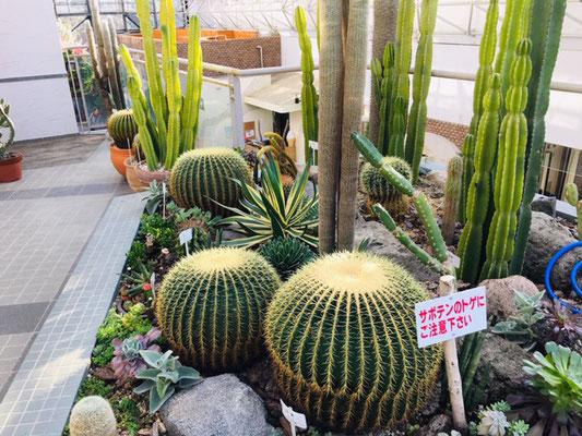 都市緑化植物園_緑と花の休憩所_003