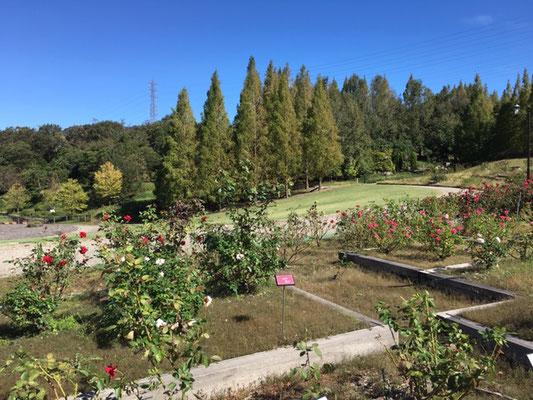 市民四季の森_季節の花・植物_002