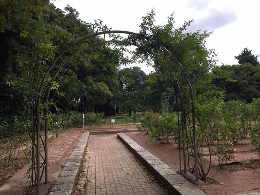 庄内緑地公園_バラ園_001