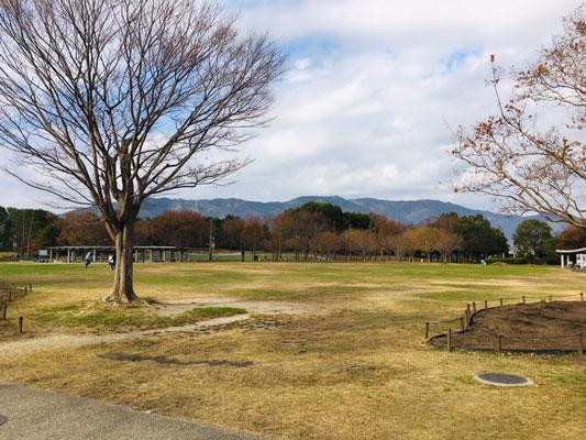 木曽三川公園センター_ピクニック・芝生広場_001