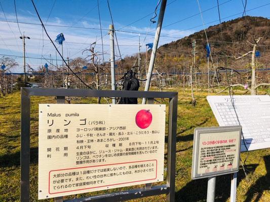 東谷山フルーツパーク_収穫体験_003