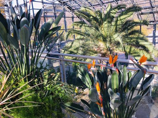 都市緑化植物園_緑と花の休憩所_007