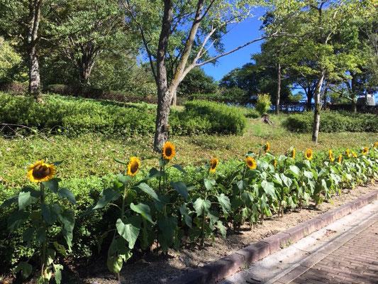 市民四季の森_季節の花・植物_004
