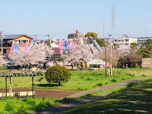 蛇池公園の桜_005