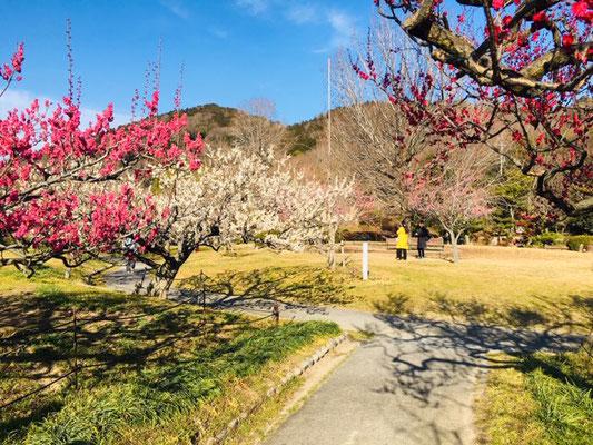 東谷山フルーツパーク_季節の花_002