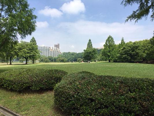 平和公園_メタセコイア広場_002