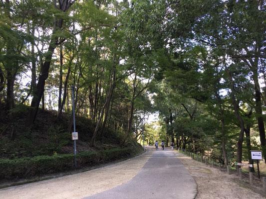 愛知県森林公園_通路