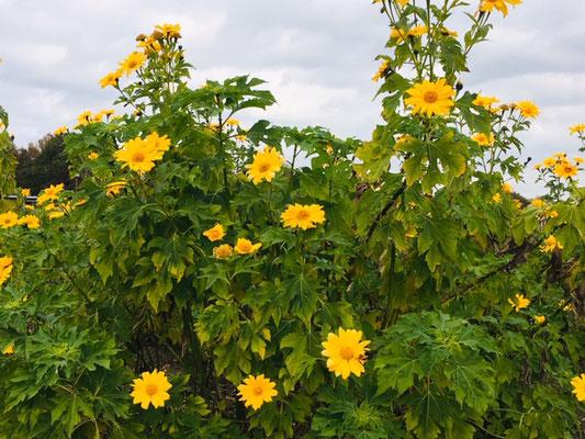 木曽三川公園センター_季節の花・植物_001