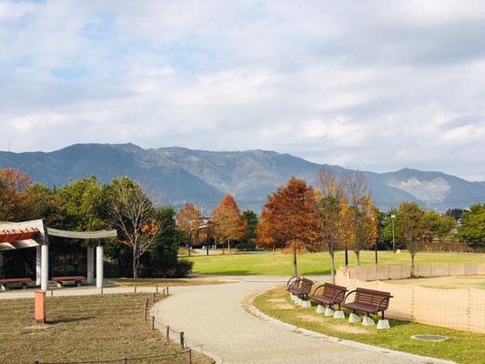 木曽三川公園センター_季節の花・植物_004