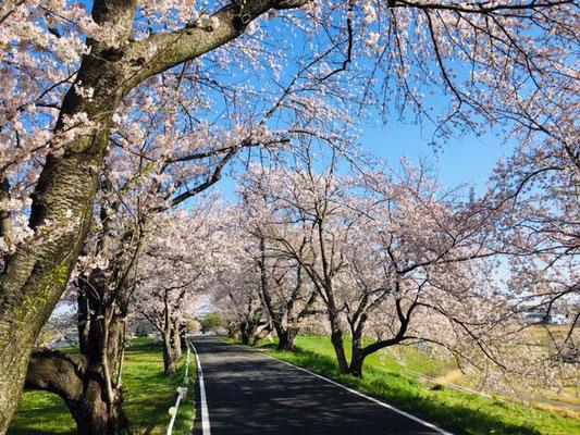 蛇池公園の桜_006