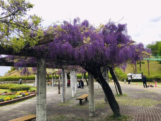 犬山ひばりヶ丘公園_季節の花・植物_002
