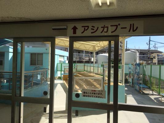 竹島水族館_アシカショー_002